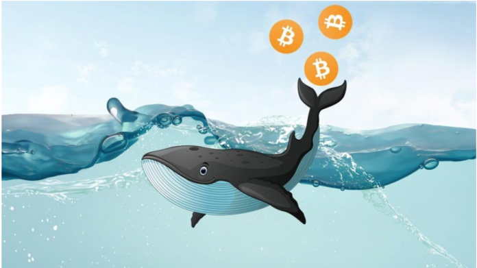 bitcoin-balina-sayisinda-buyuk-yukselis