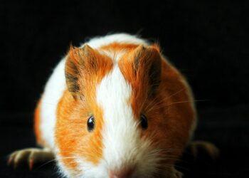 Kripto Para Ticaretinde Hamster!